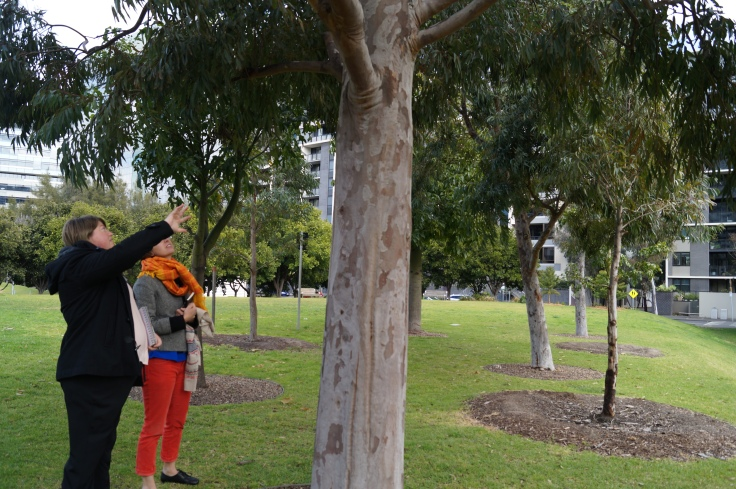 그림2-2(공원-나무)